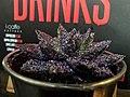 Sparkling plant (38614621434).jpg