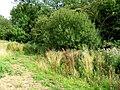 Spot the footbridge - geograph.org.uk - 934970.jpg