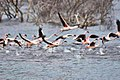 Spring flamingo.jpg