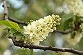 Spring in London (7116663895).jpg
