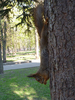 Squirrel eating. Memorial park at Sokol.jpg