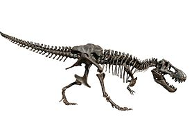 Stan T. rex in Oslo white background.jpg