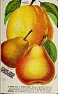 Stark fruits (1896) (20544534875).jpg