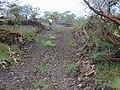Starr-020422-0114-Bidens pilosa-habitat-Puu o Kali-Maui (24440194872).jpg