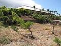 Starr-090721-3291-Adenanthera pavonina-habit-Old Ka Lima nursery Wailuku-Maui (24944216576).jpg