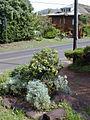Starr 020114-0012 Artemisia australis.jpg