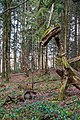 Sternwalddrache (Thomas Rees) jm26421.jpg