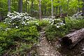 Storm King Bobcat Trail in spring.jpg
