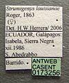 Strumigenys louisianae casent0173256 label 1.jpg