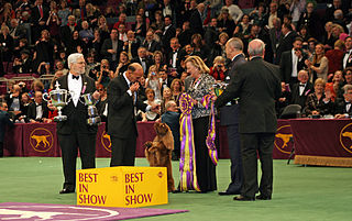 Westminster Kennel Club Dog Show annual conformation show in New York City