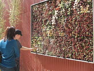 Succulent wall in a nursery in San Francisco, United States consisting of Sempervivum, Echeveria, and Crassula Succulent 'wall'.jpg