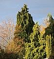 Sunlight on Trees - Autumn 2020 - Flickr - kitmasterbloke.jpg