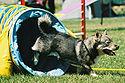 Image Result For Dog Training Pembroke