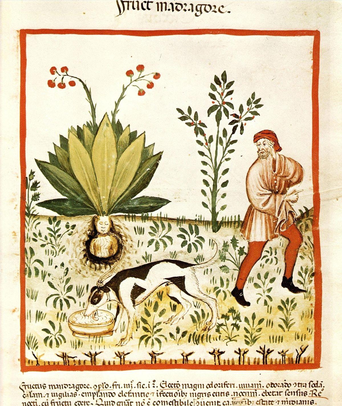 Tacuina sanitatis - Wikipedia