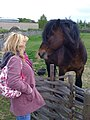 Talking to a horse at Bede's World - geograph.org.uk - 1306318.jpg