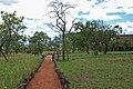 Tarangire 2012 05 28 1841 (7468545902).jpg