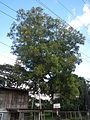 Taysan,Batangasjf9892 25.JPG