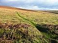Tempting track - geograph.org.uk - 685079.jpg