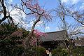 Tenryu-Ji Sakura.jpg