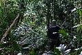Terra Indígena Tenharim do Igarapé Preto, Amazonas (27626073917).jpg