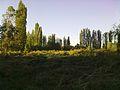 Terreno Chacra Santa Cecilia - panoramio.jpg