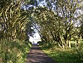 The Great Northern Trail, Cullingworth - geograph.org.uk - 224414.jpg