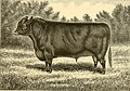The breeds of live stock, and the principles of heredity (1887) (14778187161).jpg
