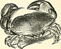 The common objects of the sea shore - including hints for an aquarium (1860) (14579467787).jpg