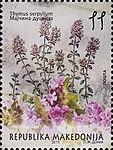 Thymus serpyllum. Stamp of Macedonia.jpg