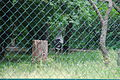 Tierpark Berlin Frühjahr 2013 475.JPG