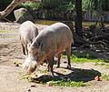 Tierpark Hellabrunn 2.jpg