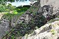 Tikal, Guatemala - panoramio (23).jpg