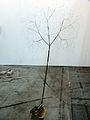 Tomas Saraceno, Big Space Elevator Tree - Artissima 2012 (8178716272).jpg