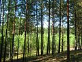 Tomsky District, Tomsk Oblast, Russia - panoramio (9).jpg
