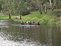 Torrens Breakout Creek 3.JPG