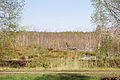 Totes Moor im LSG Schneerener Geest vor Neustadt am Rübenberg IMG 6816.jpg