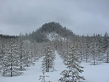 Mountain full of trees in the snow