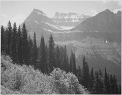 "Trees and bushes in foreground, mountains in background, ""In Glacier National Park,"" Montana., 1933 - 1942 - NARA - 519859.tif"