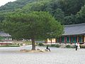 Trees at Girimsa-Gyeongju-Korea-02.jpg
