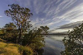 Trees during the sunset in Gulf Islands National Park Reserve, Sidney Island, BC, Canada.jpg