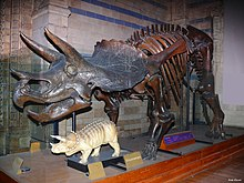 Natural History Museum London Wikipedia