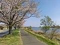 Tsuchiura-Sakura-River-2018040102.jpg