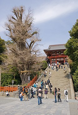 Tsurugaoka Hachiman-gū - Wikipedia, the free encyclopedia