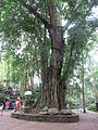 Ubud Monkey Forest 10.JPG