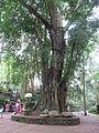 Ubud Monkey Forest 10.JPG