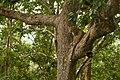 Uday Kiran Leopard BR Hills-11.jpg