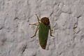 Unbekanntes Insekt 4567.jpg