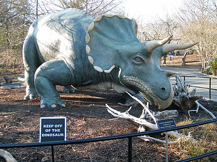 a Triceratops statue on outdoor display