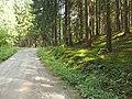 V tieni lesa - panoramio.jpg