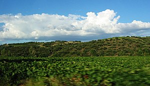 Cartaxo - The scenic landscape of the Tagus valley near the town of Cartaxo